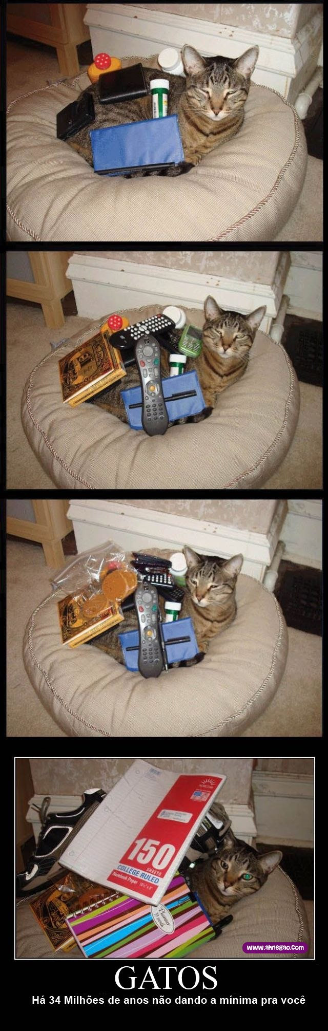 gatos estupidos com: