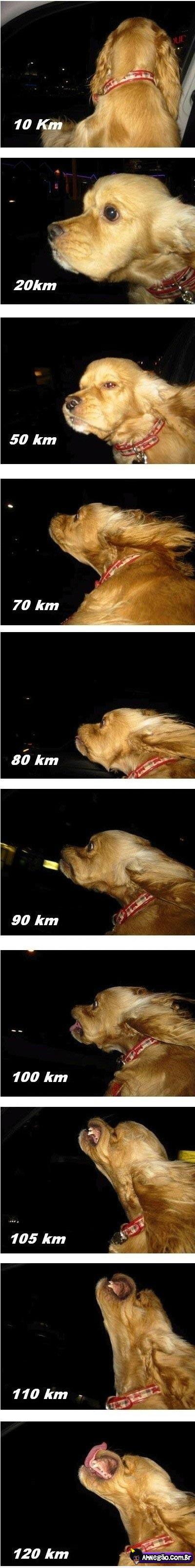 Coisas Engraçadas e Divertidas! - Página 25 Cachorro-speed