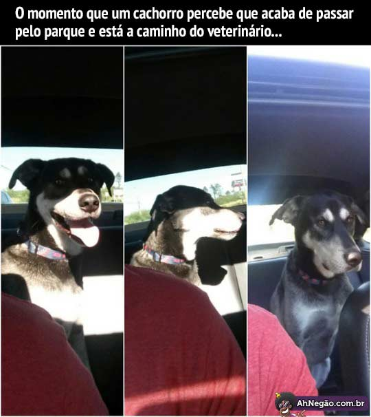 Hora de Rir~ - Página 33 Cachorro1