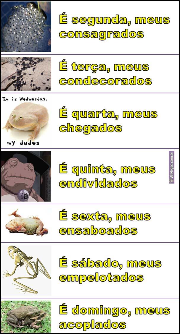 meme quinta 34
